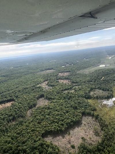 DEC completes clear cuts for habitat