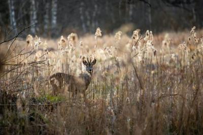 N.Y. adopts hunting regulations
