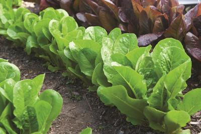 Seed companies face onslaught of orders amid virus