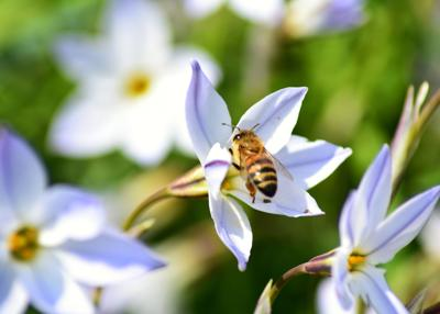 How to help save the bees