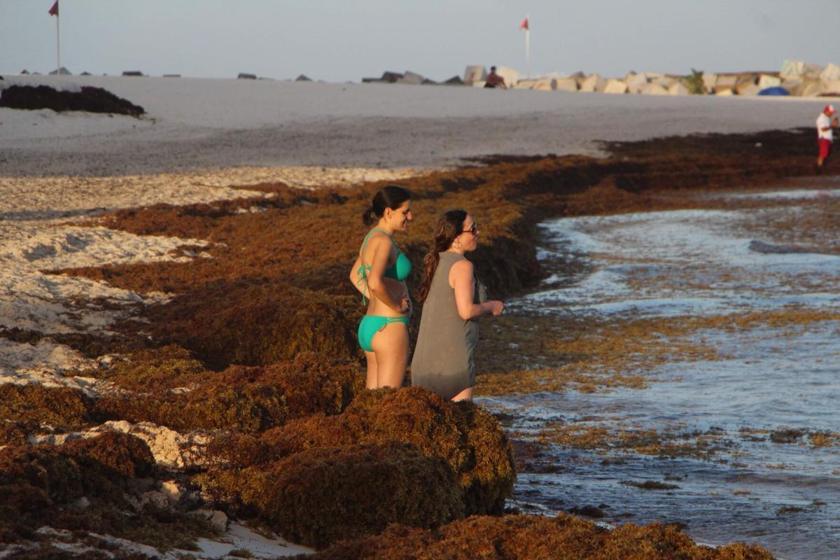 Sargassum on Caribbean tourist beach