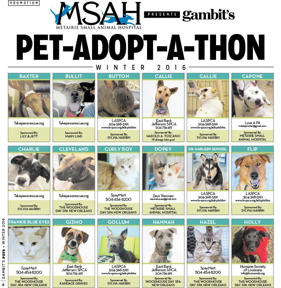Gambit's Pet-Adopt-a-thon winter 2016_lowres