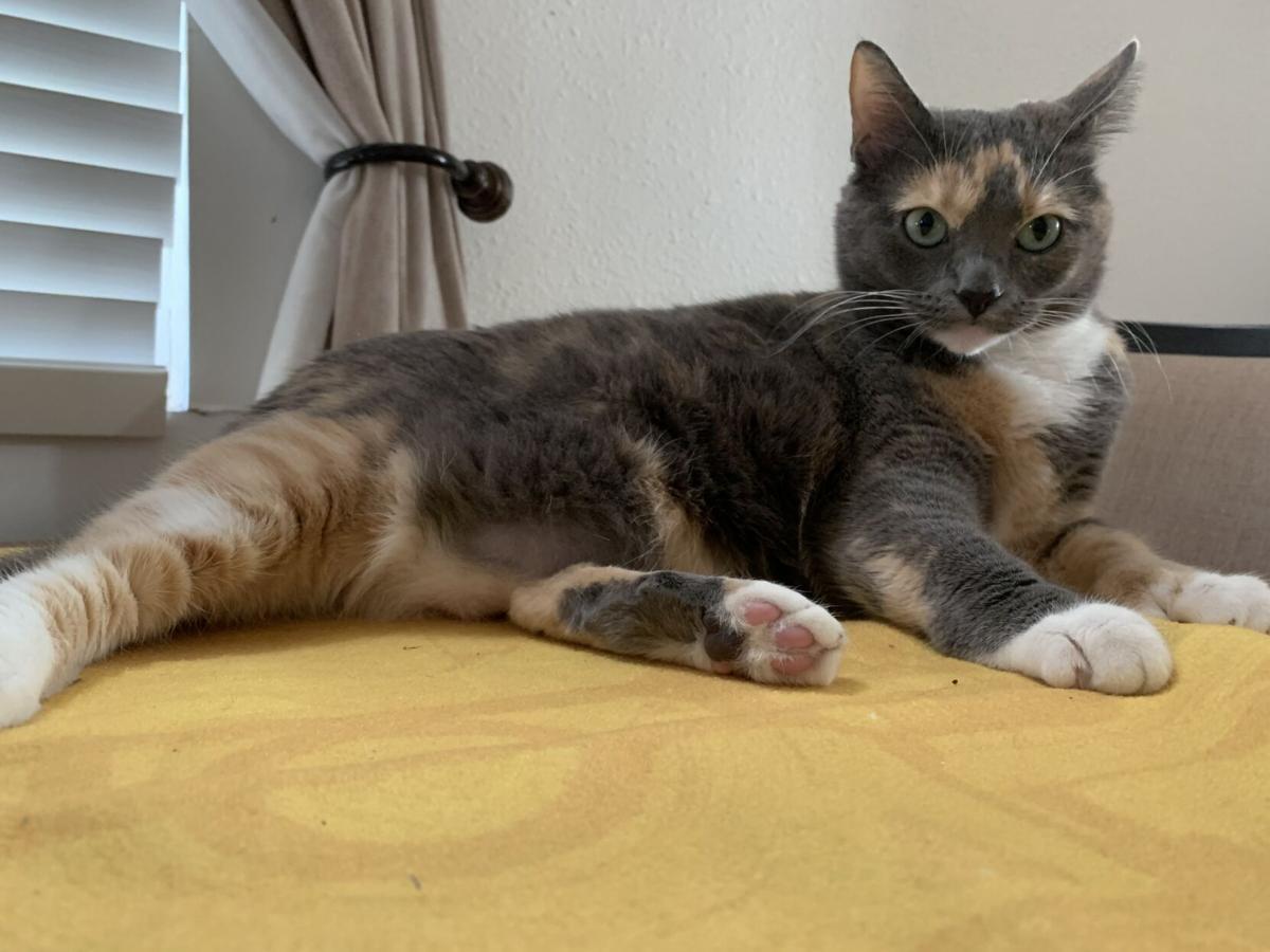 Pretty Pretty Princess Meow Meow Jawsy Jaws (copy)