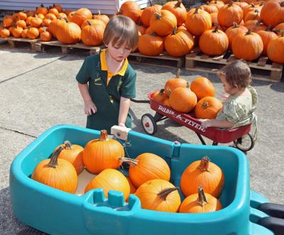 Halloween pumpkin patch file photo