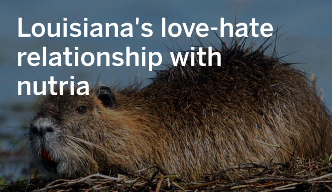 Louisiana's love-hate relationship with nutria through the years