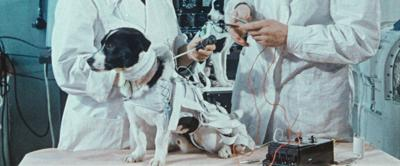SPACE DOGS 02_Courtesy Icarus Films.jpg