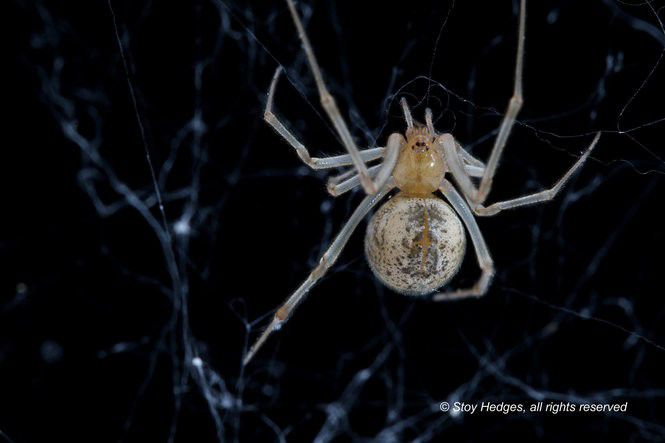 16 spiders you might run into in Southeastern Louisiana