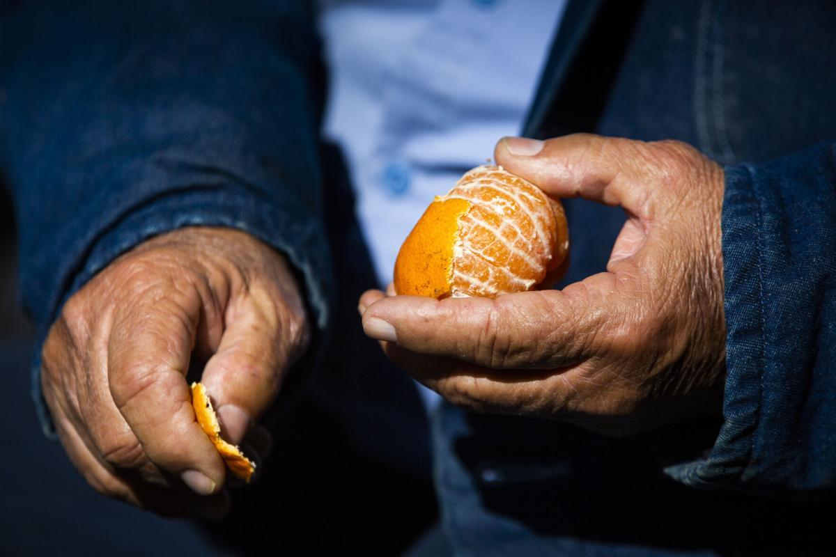 NO.citrus.008.jpg