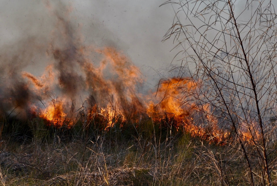 Fire emerges as an ally in the fight to save Louisiana's marsh
