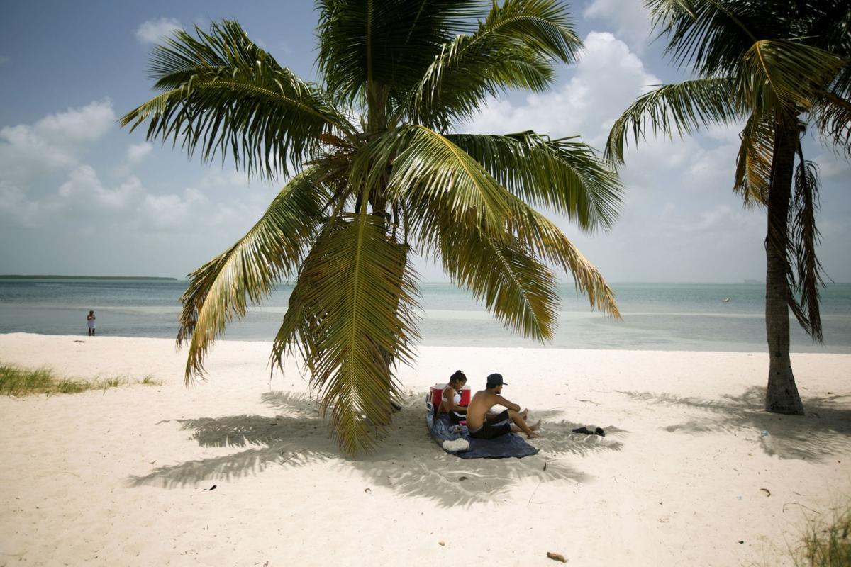 Florida Palms Endangered
