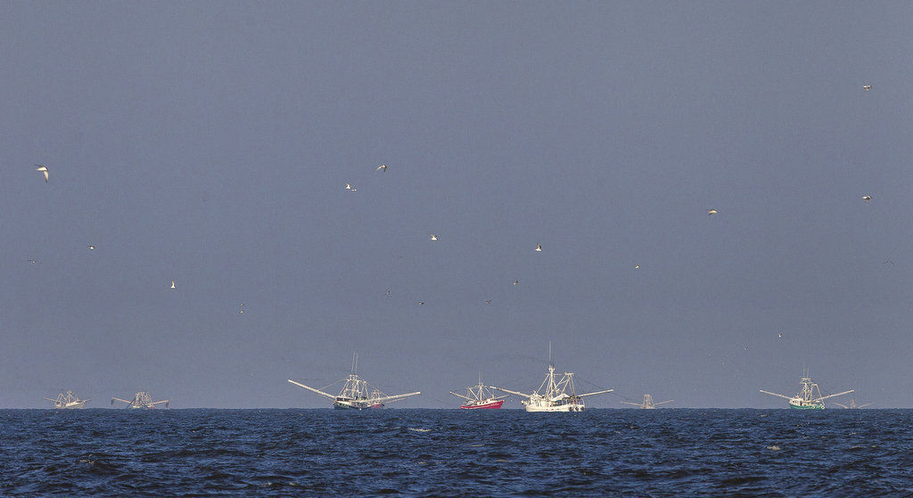 Louisiana seafood catch down, prices up in 2013, federal report says