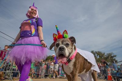 Dogs and their humans will march in Mandeville's Mardi Paws parade March 10