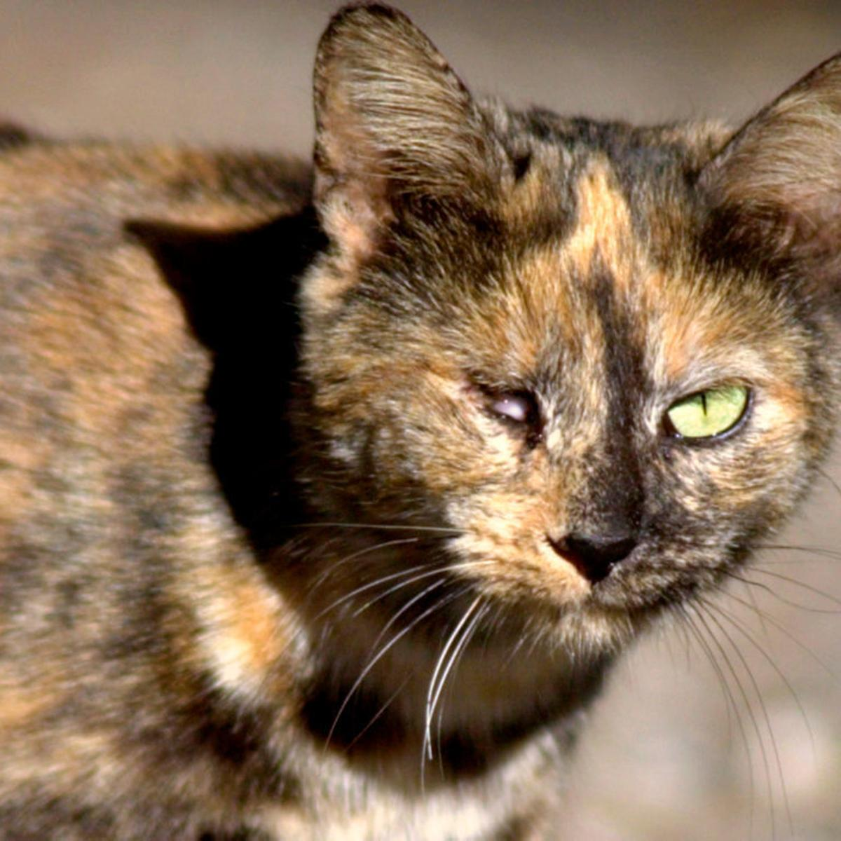 15 reasons science says feral cats are a disaster | Archive | nola com