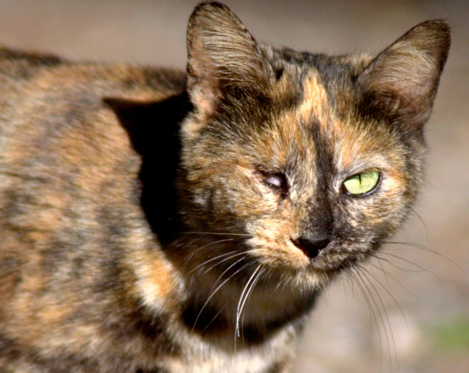 15 reasons science says feral cats are a disaster