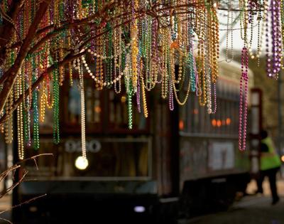Mardi Gras season beads hanging in tree by streetcar stock