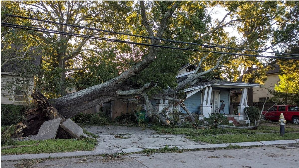 Metairie tree damage from Hurricane Zeta