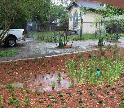 wet plants