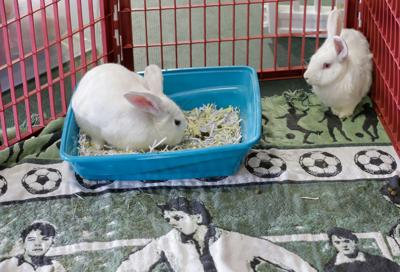 NO.bunny.nc.033121.0002.jpg