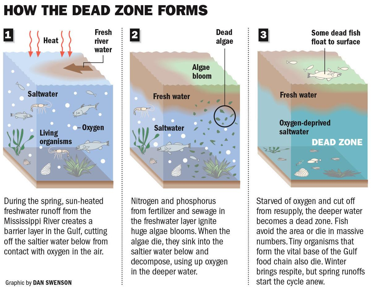 How Dead Zone Forms