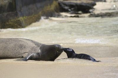 Why are marine mammals so big? Louisiana expert helps answer