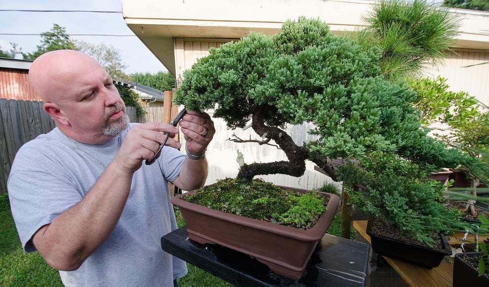 Bonsai Society Set To Auction Off Tiny Trained Trees Home Garden Nola Com