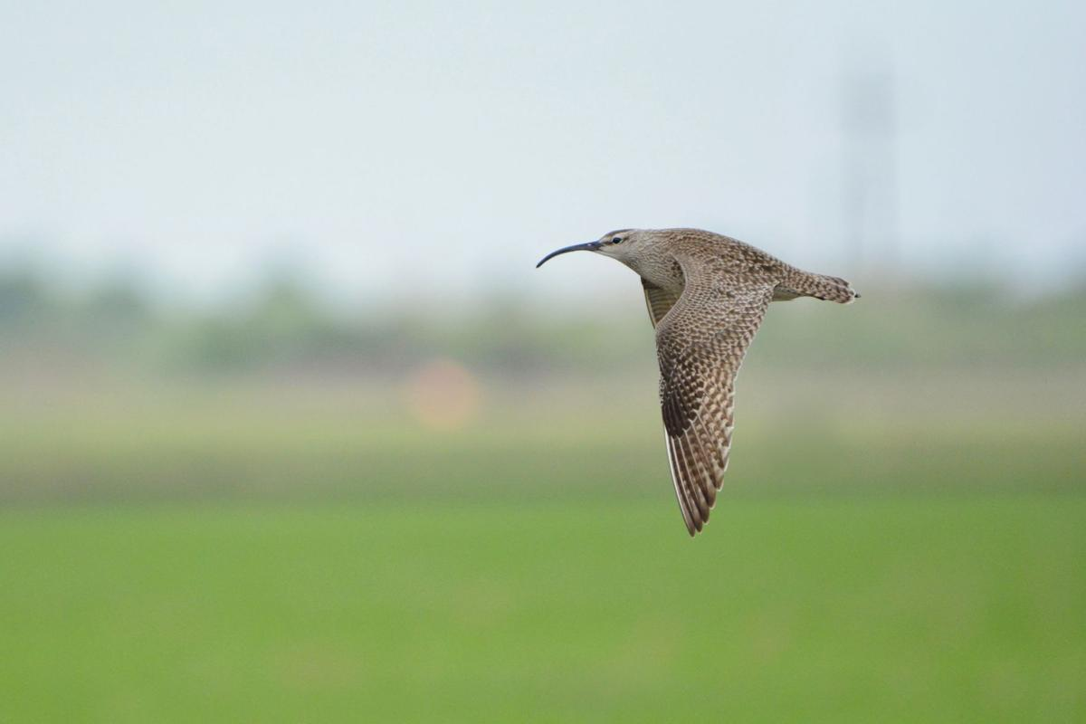 Weather Tracking Radar Used To Tally Birds Migrating Across