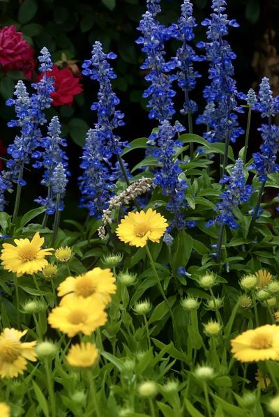 LIFE-HOME-ONGARDENING-3-MCT