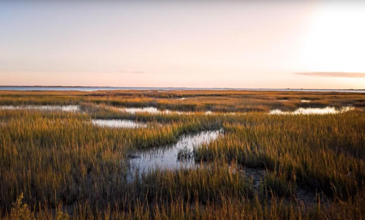 LPBF salt marsh photo.jpg