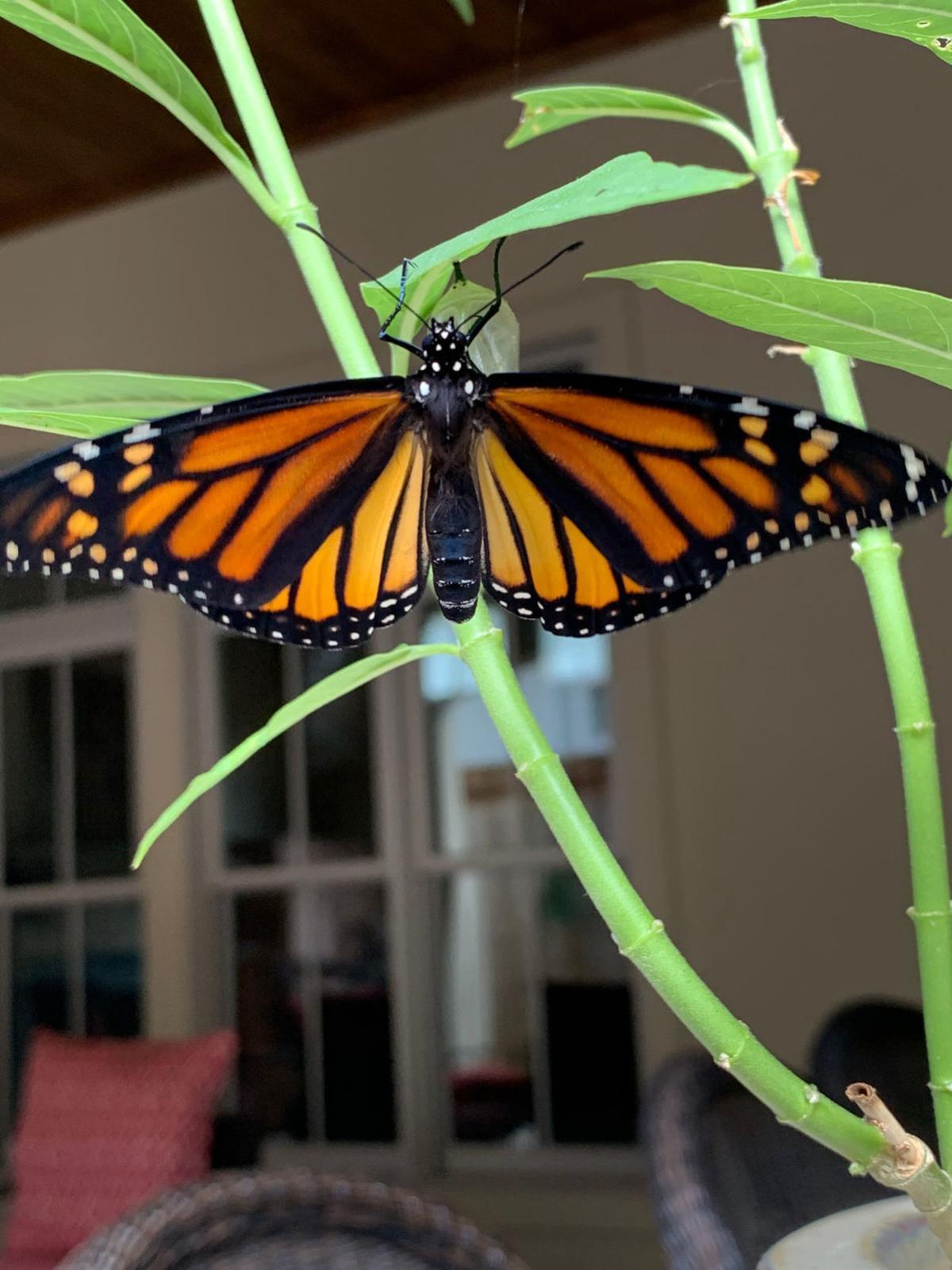 ACA.butterflystation.021.adv