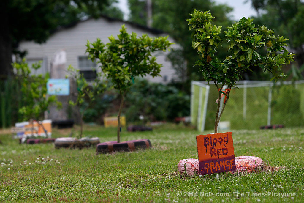 Volunteer grows food for the hungry on formerly blighted Ninth Ward lots