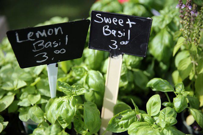 10 herbs that thrive in Louisiana heat and great recipes to use them