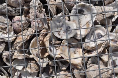 Oyster shells close up