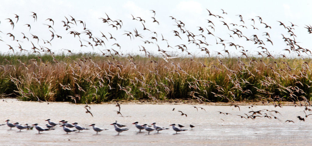 Louisiana coast will continue to erode while state waits for permits: Editorial