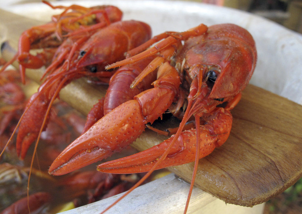 Crawfish Boil 101: Expert boilers give you their advice   Where NOLA