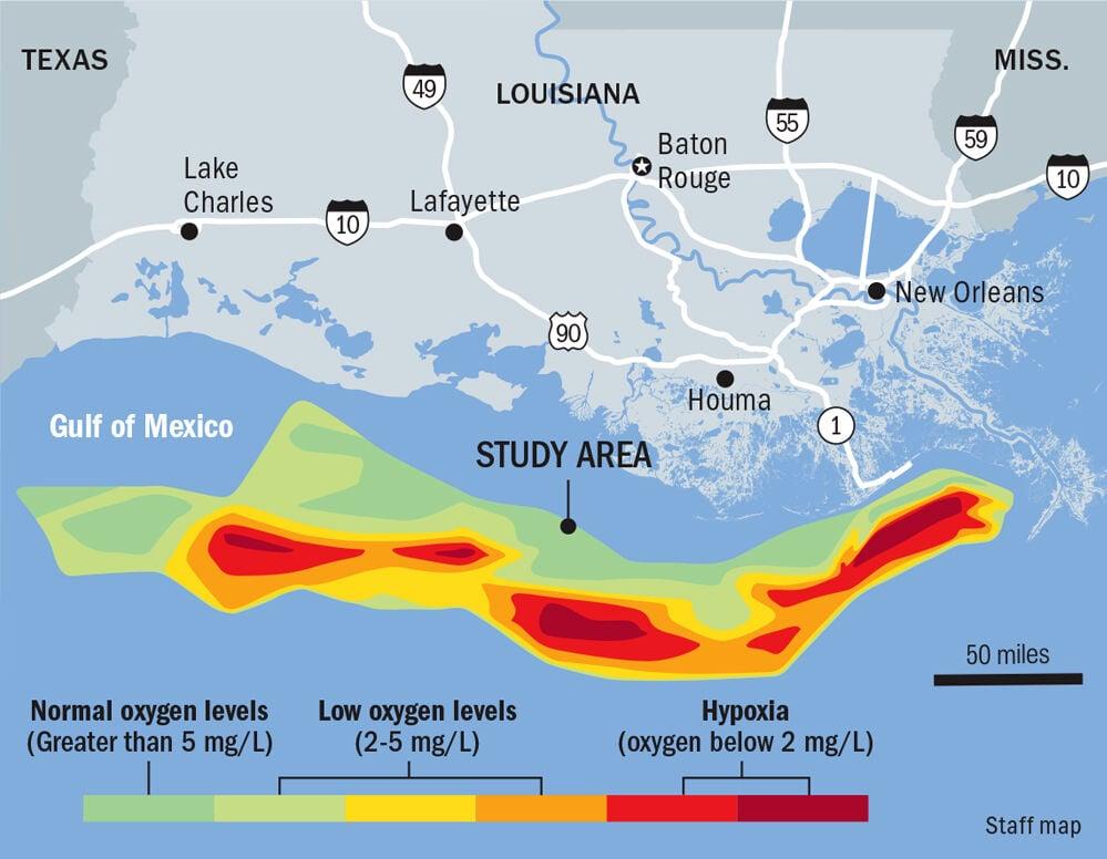 080520 Gulf Dead Zone Map