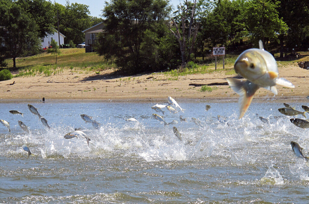 Renaming the Asian carp