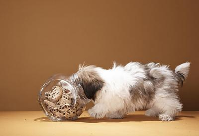 Foods that can make your pet sick_lowres