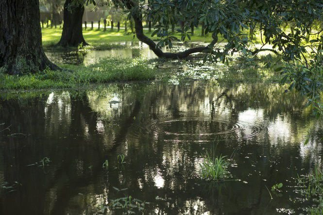 5 simple things homeowners can do to fight flooding and improve