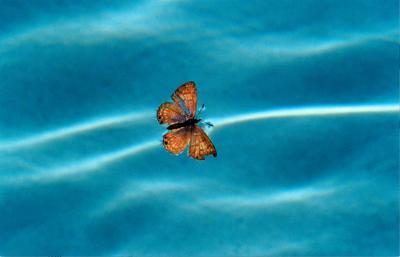 MAM_Butterfly300-b.jpg