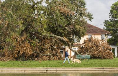 Hurricane Ida damage to tree canopy