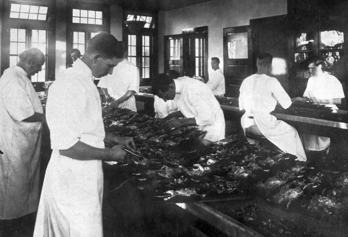 The battle against bubonic plague: 100 years ago, New Orleans waged war on rats