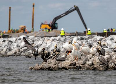 Restoring Queen Bess Island