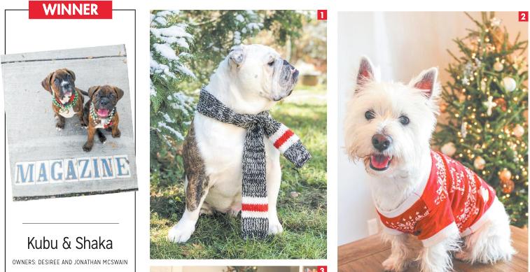 Gambit Holiday Pet Photo Contest