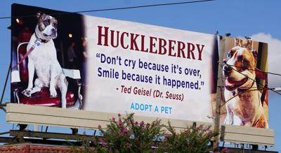 Huckleberry dog billboard