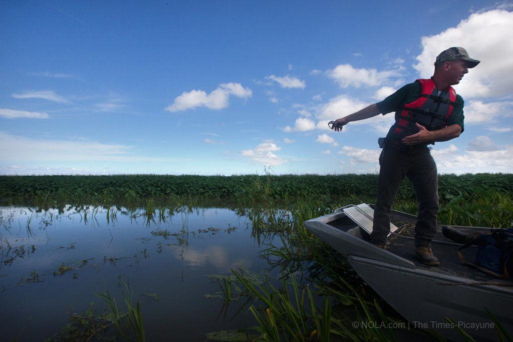 Bug invader killing Mississippi Delta wetlands draws federal attention