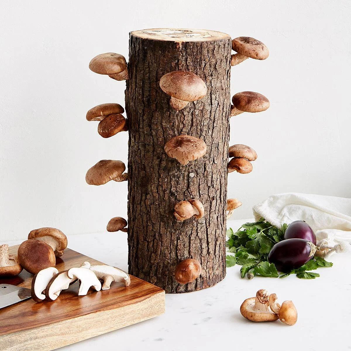 COOL GREENS  uncommon goods mushroom log.jpg
