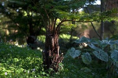 Trees die when too much fill covers their roots - here's why