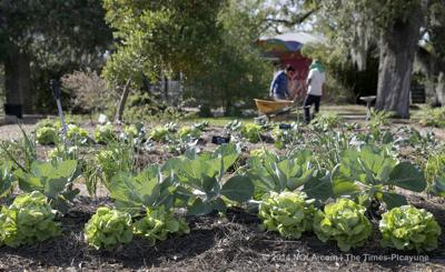 Spring Garden Show to fill the New Orleans Botanical Garden with exhibits, plant sales, advice and entertainment