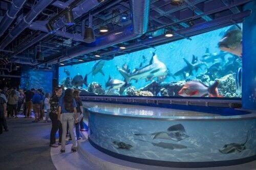 Shark Discovery