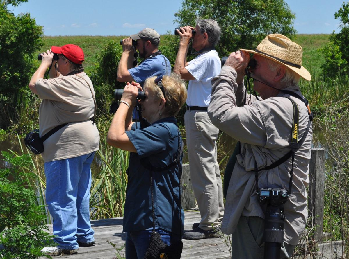 Bird watchers are flocking to Louisiana's fragile coast, but for how long?